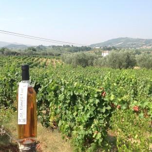Portugal Weingut Pinheiro